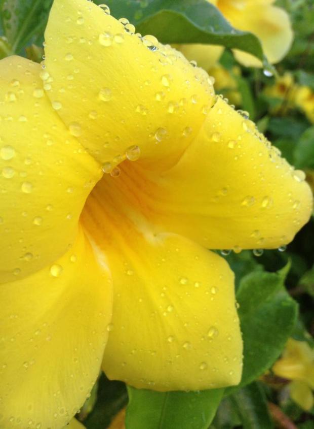 Okinawa Flower
